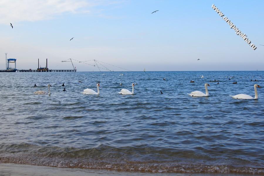 Отдых Все включено на Черном море 2018 в Краснодарском